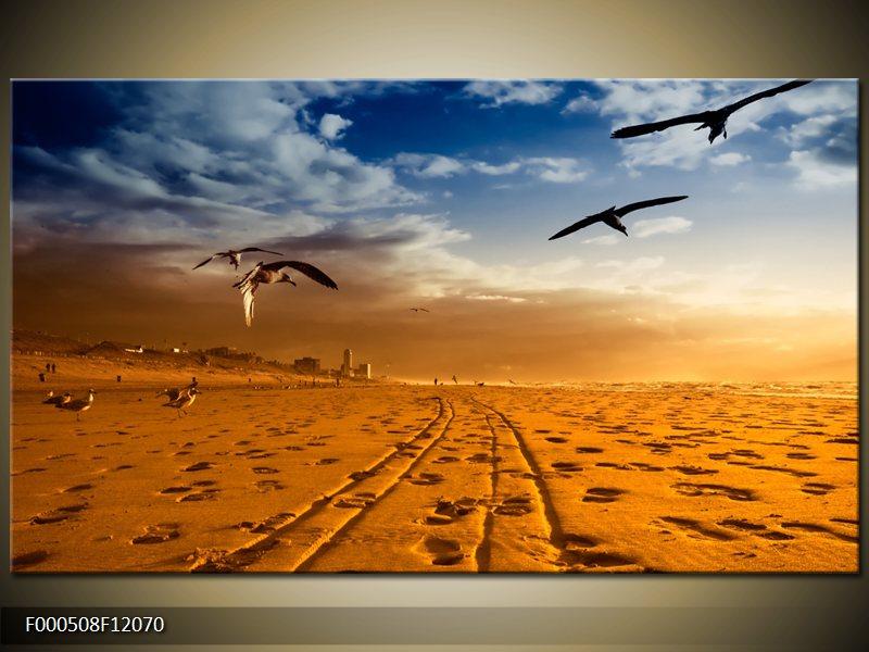 ptáci nad pláží