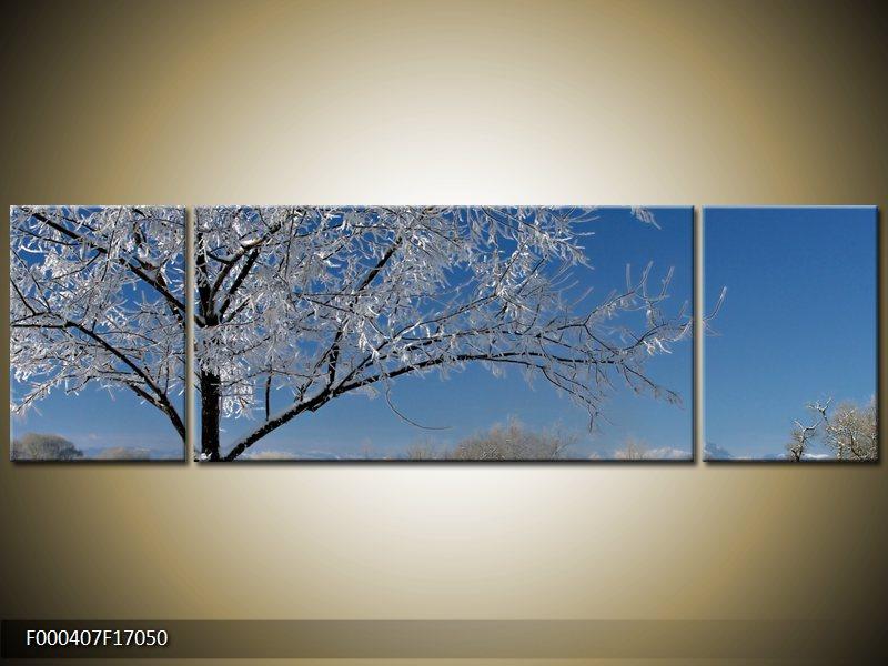 Obraz strom v zimě (F000407F17050)