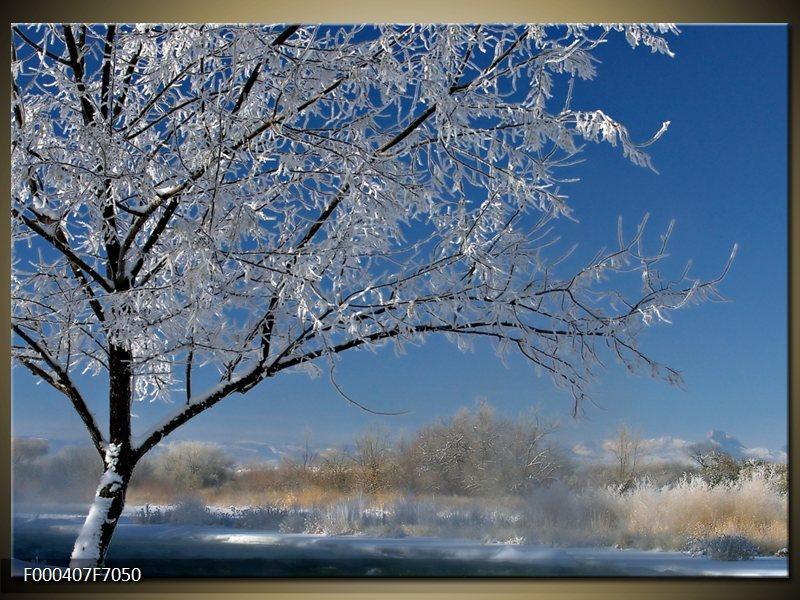 Obraz strom v zimě (F000407F7050)
